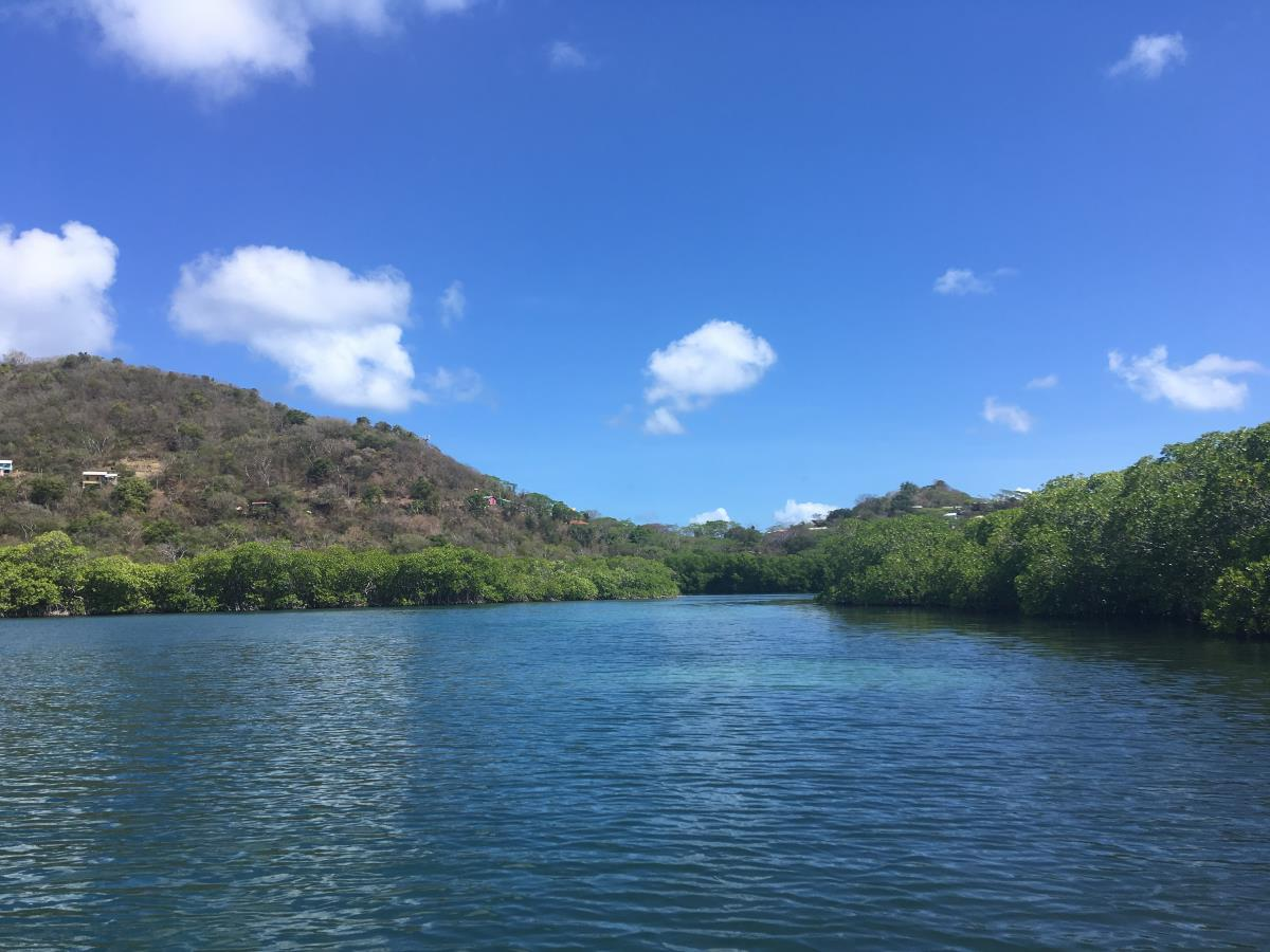 Vid Tyrell Bay på Carriacou finns ett stort mangroveträsk. Fantastiskt vackert.
