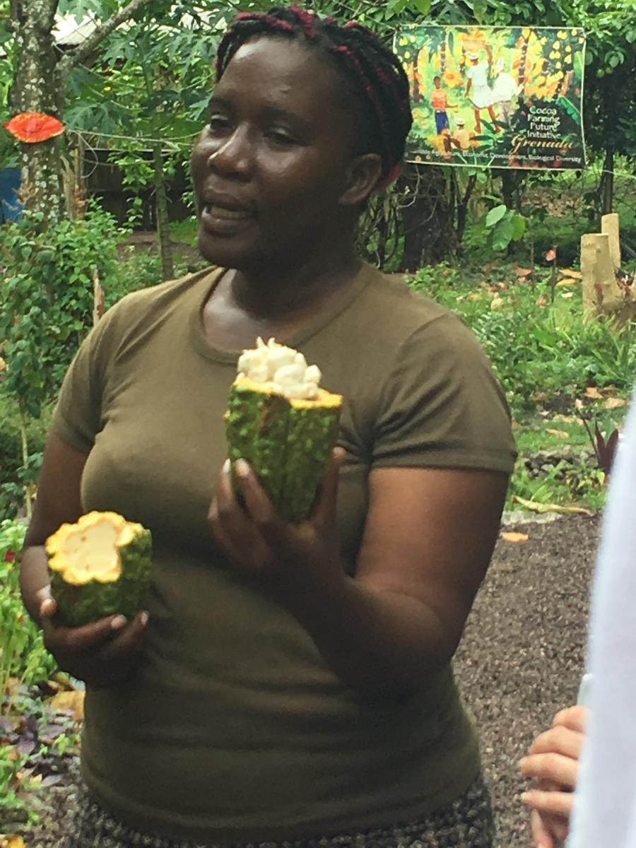 Vår guide visar kakaobönorna inuti frukten.
