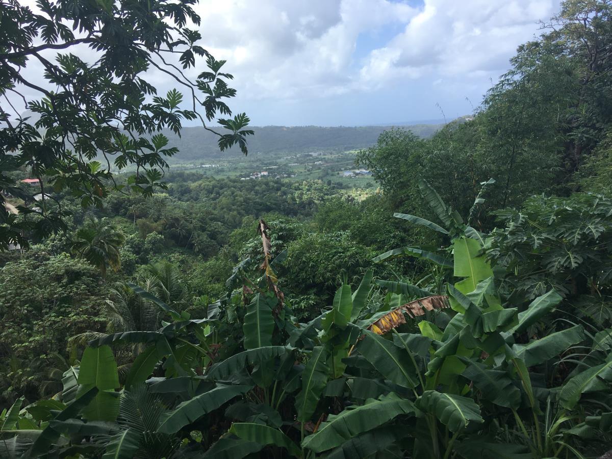 St Lucia är otroligt grönt och skönt.