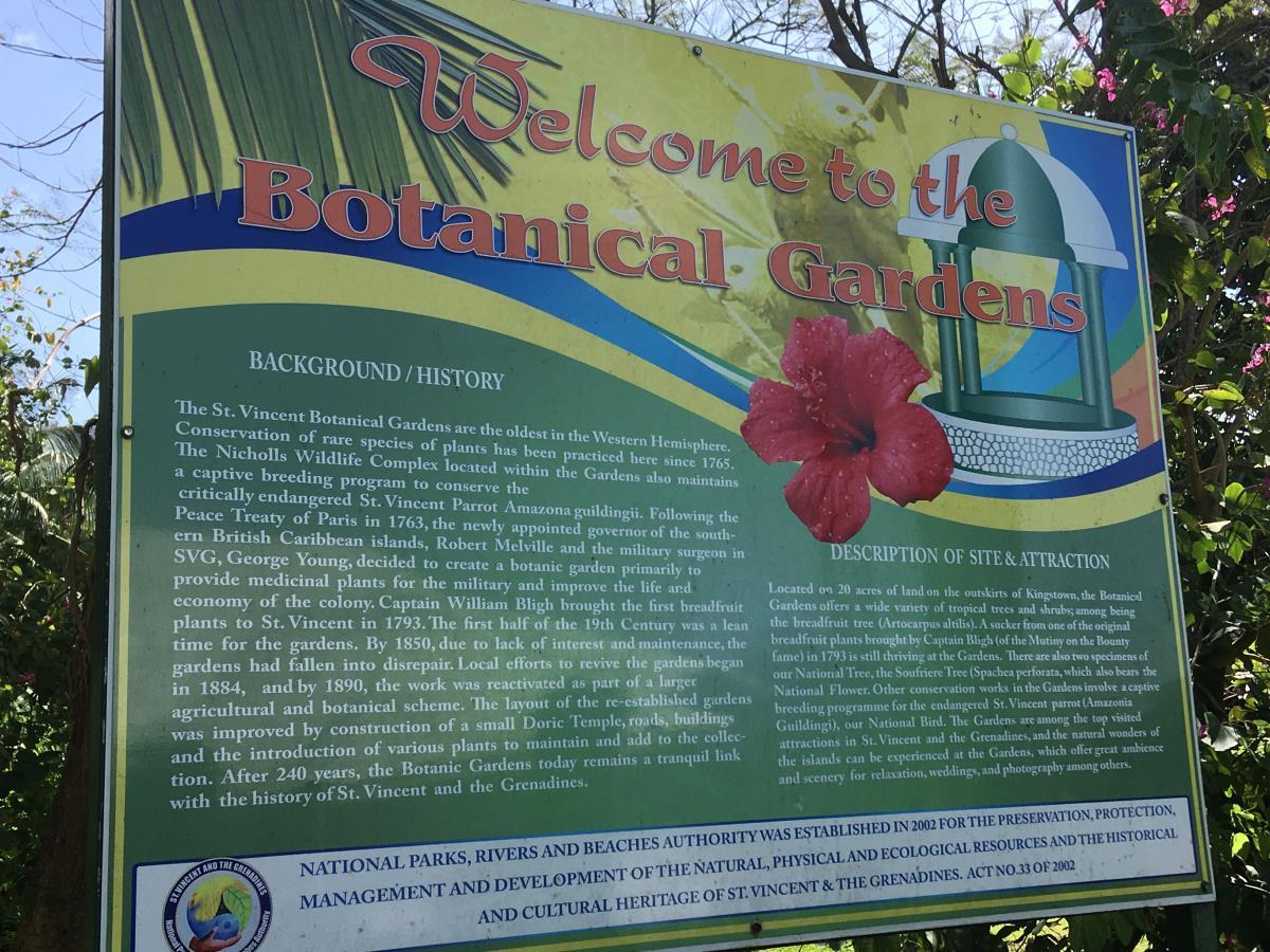 Botaniska trädgården i Kingstown på St Vincent.