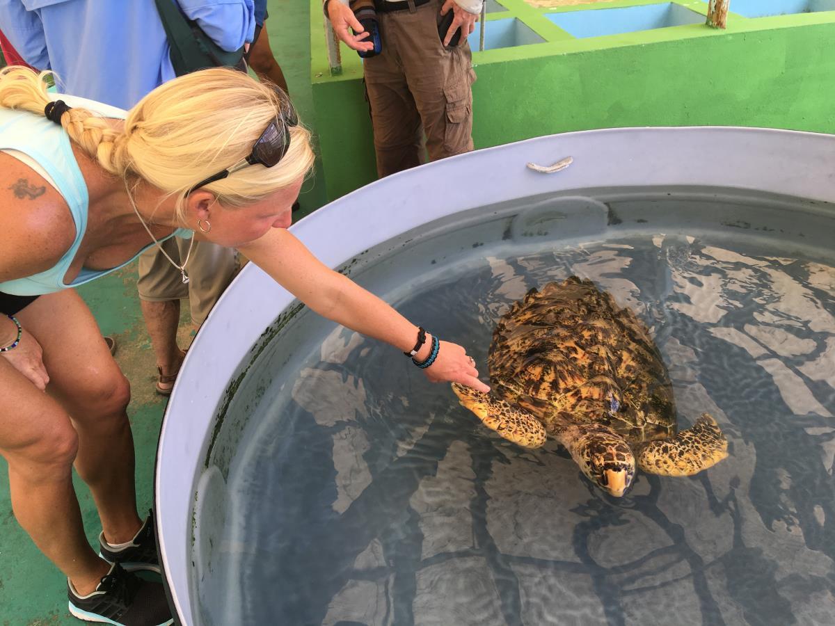 Havssköldpadda modell större.
