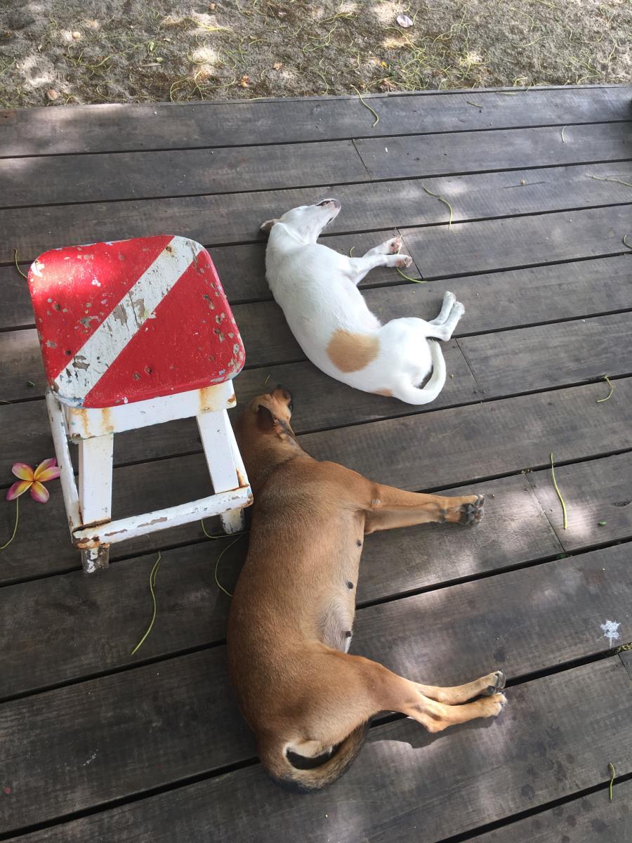 Dykhund och dykkatt sover gott i värmen på dykcentrets terrass.