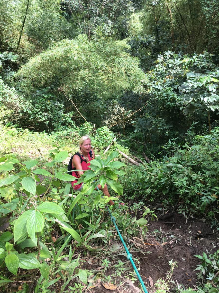 Vandring i regnskogen och äventyr.